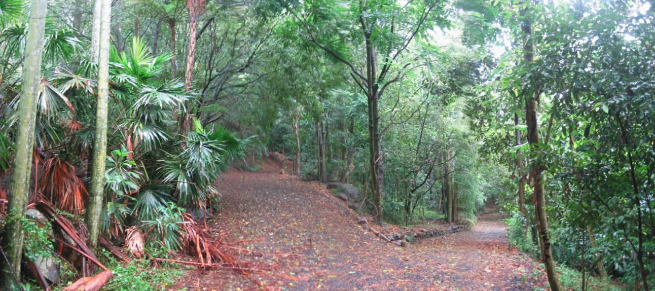 Blackbutt Rainforest.jpg