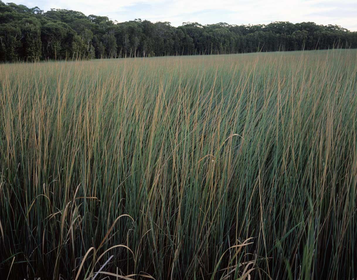 Grasslands,-NPWS-10044.jpg