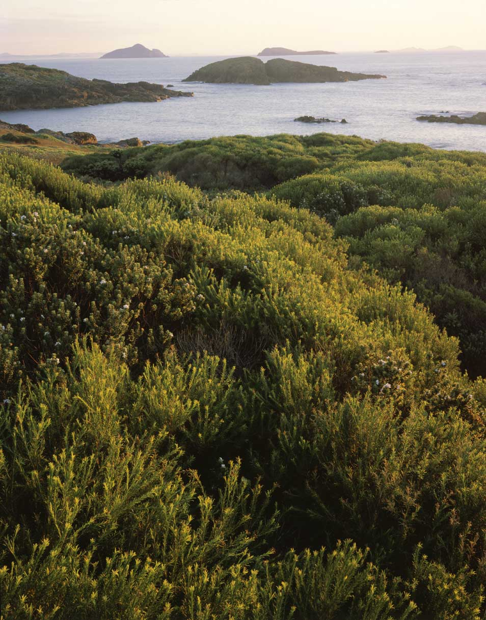Heath-&-Islands,-NPWS-10043.jpg