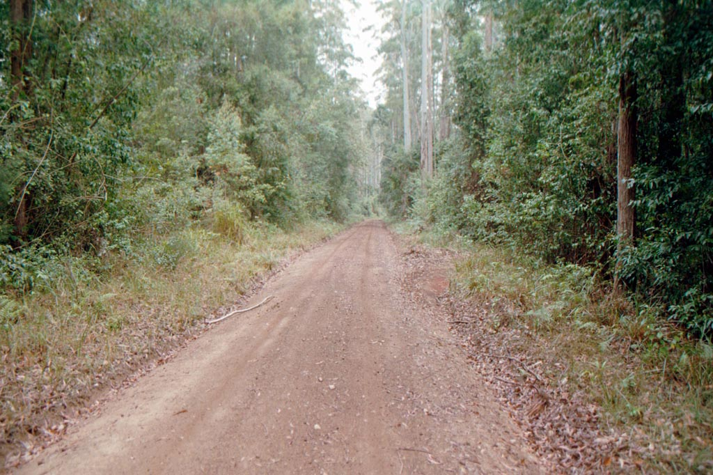 Bottlebutt Forest Rd.JPG