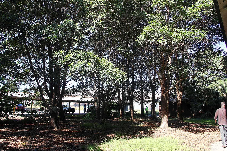 33-trees-at-entrance.jpg