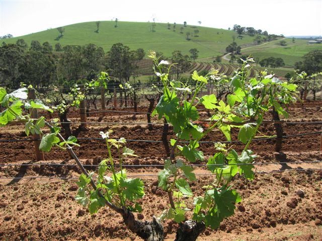 Petersons Wines 1.JPG