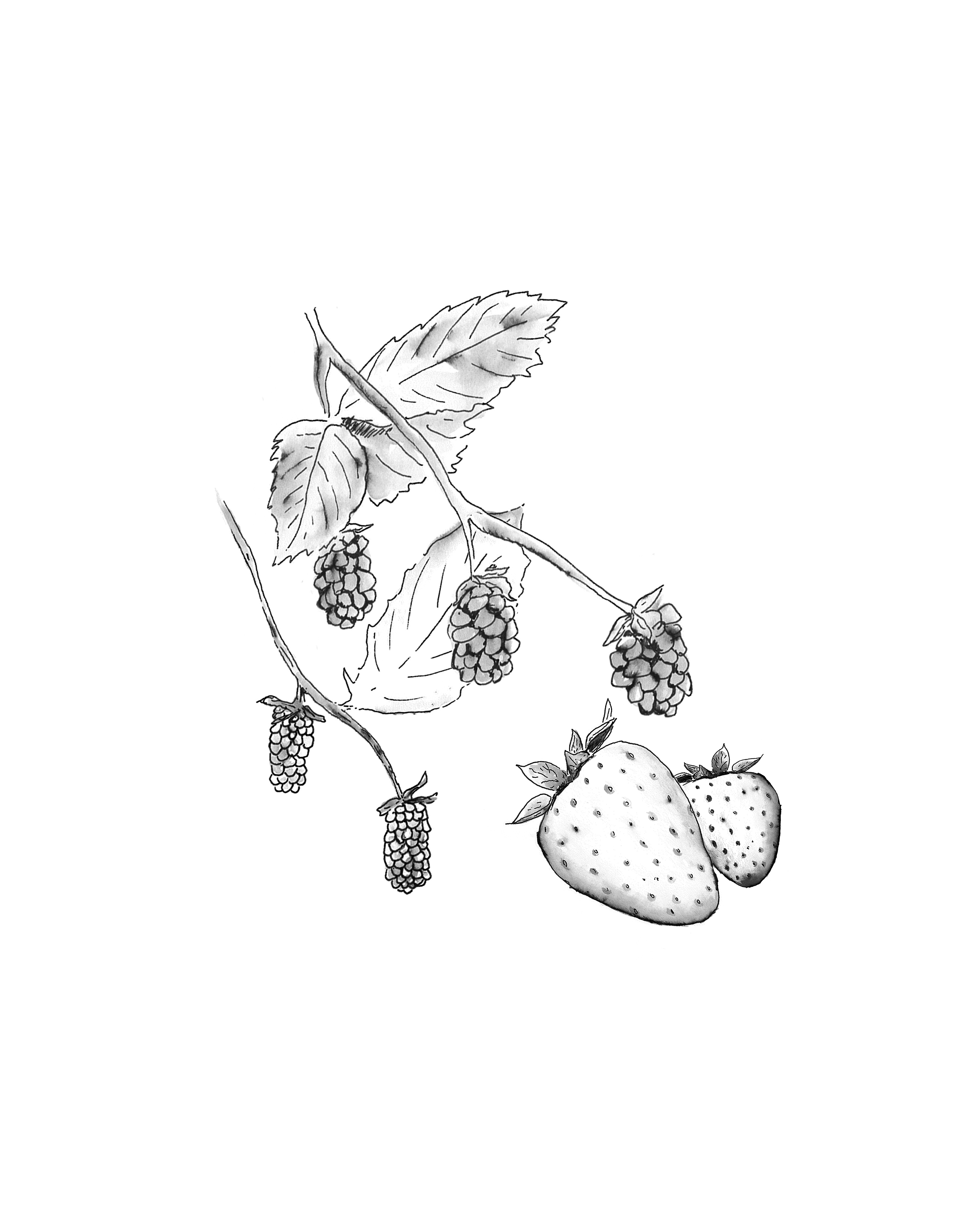 Loganberries, Olallieberries, and Strawberries