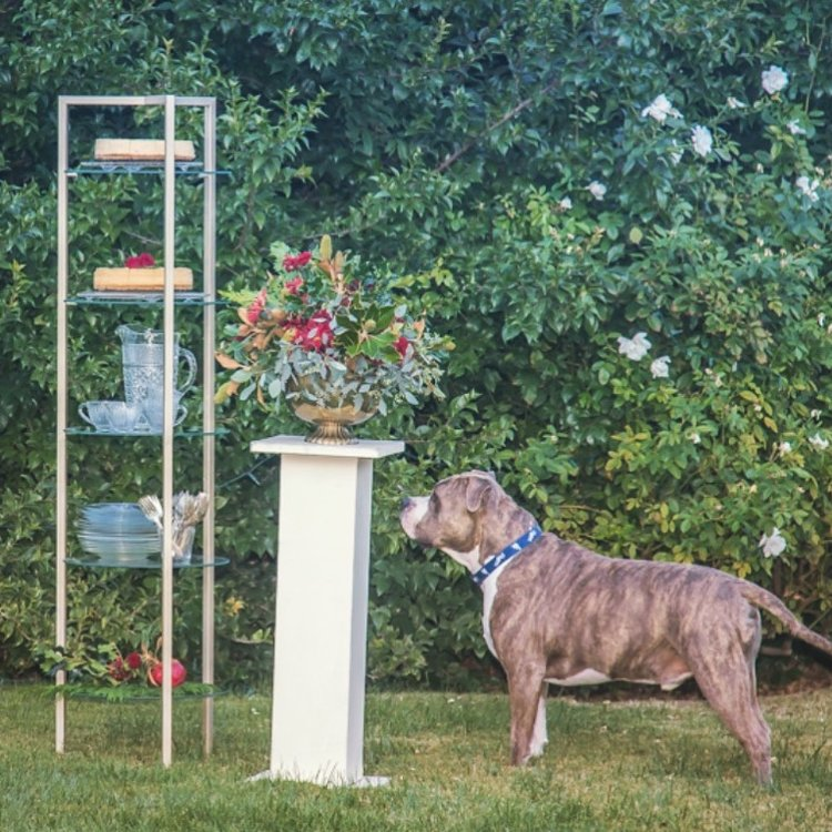 Brass round glass shelving. Etagere.. Dog looks longing for a treat.