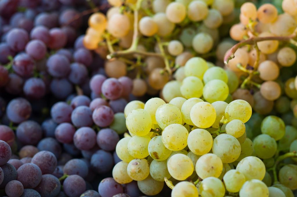 raisin-grappes-full-12631659.jpg