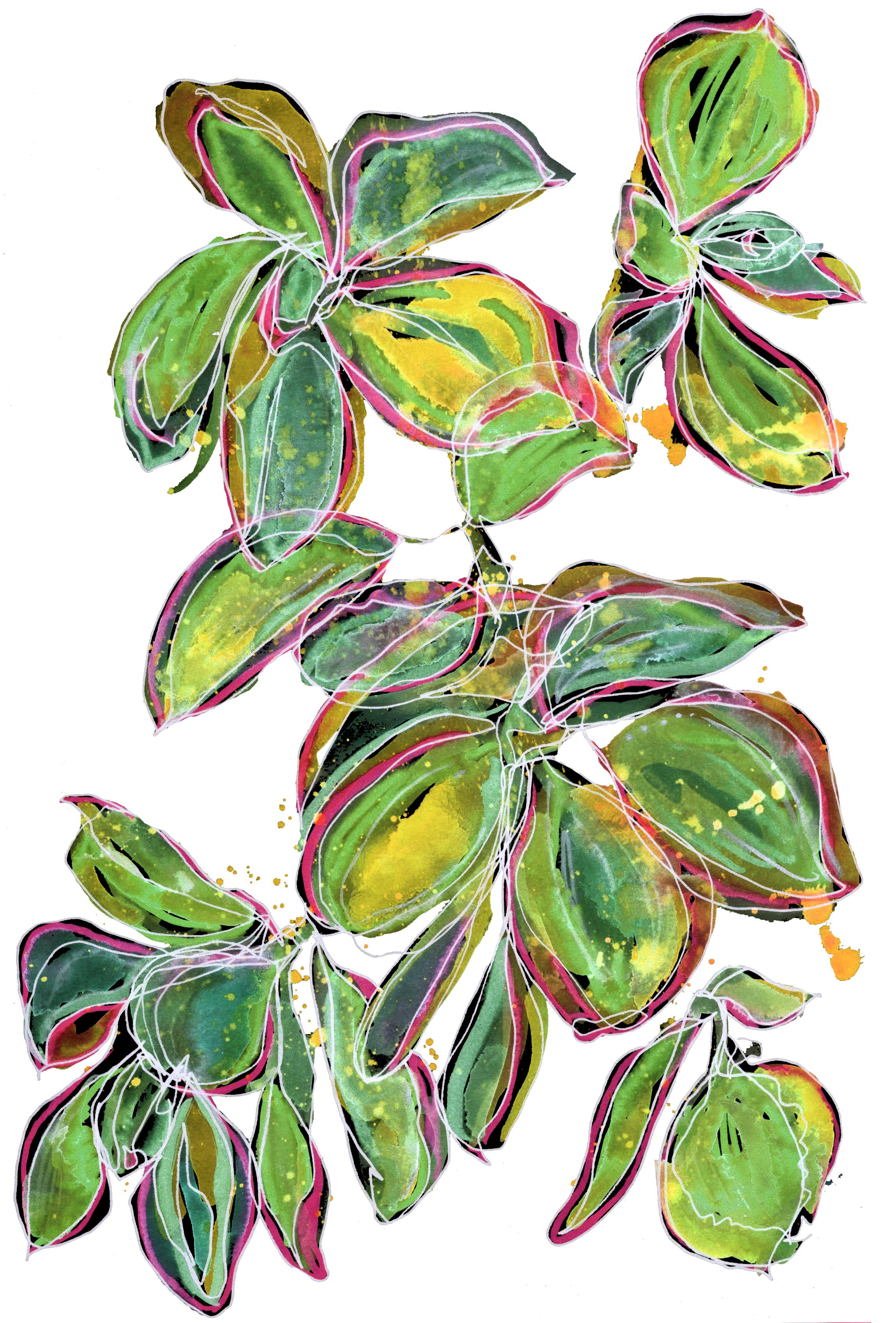 Cacti Leaves Study