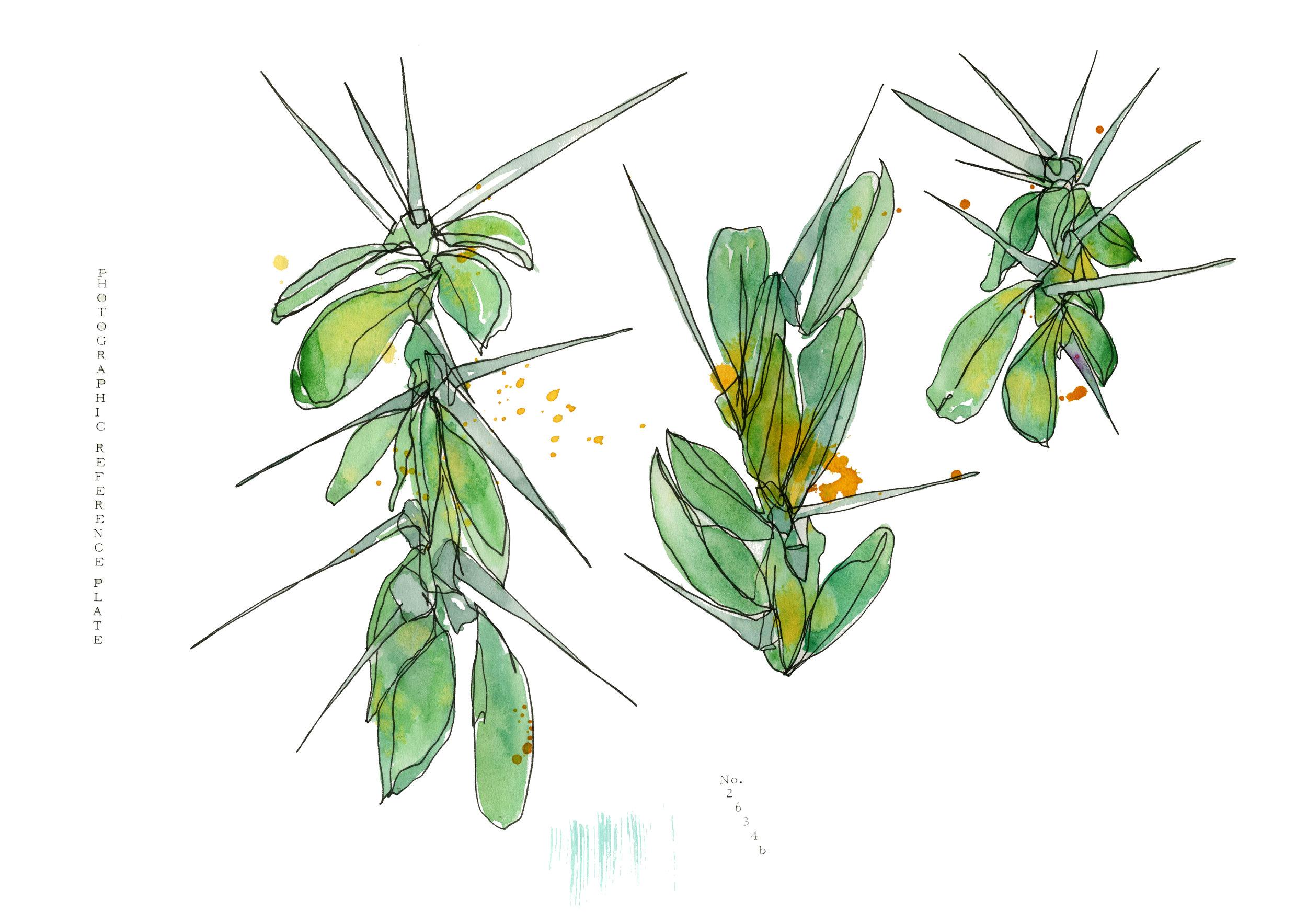 Spiky Cacti Trio