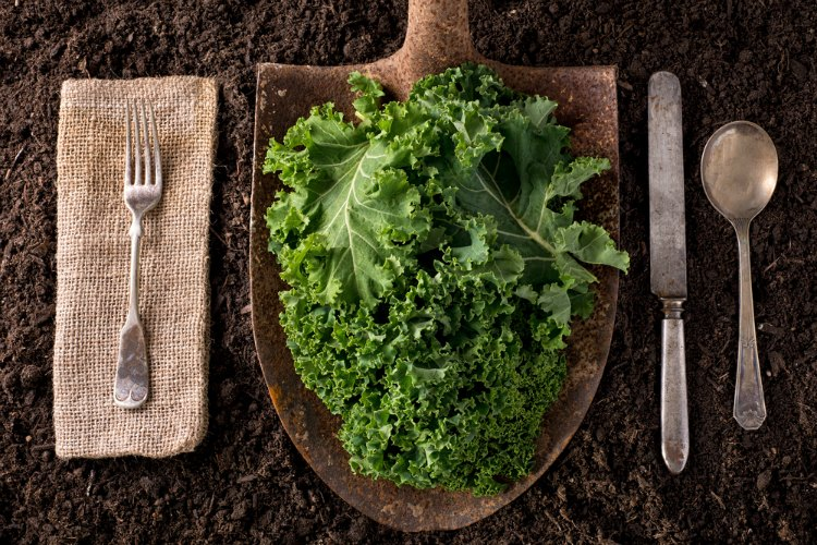15 of the Best Superfoods - Kale