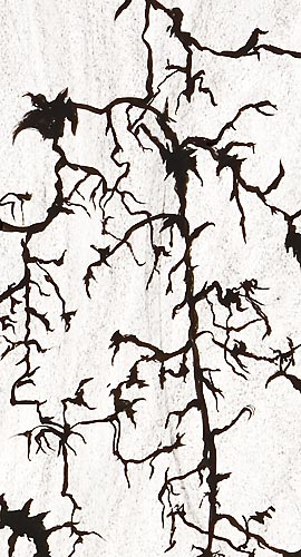 DetailsNeurons-Synapses.jpg