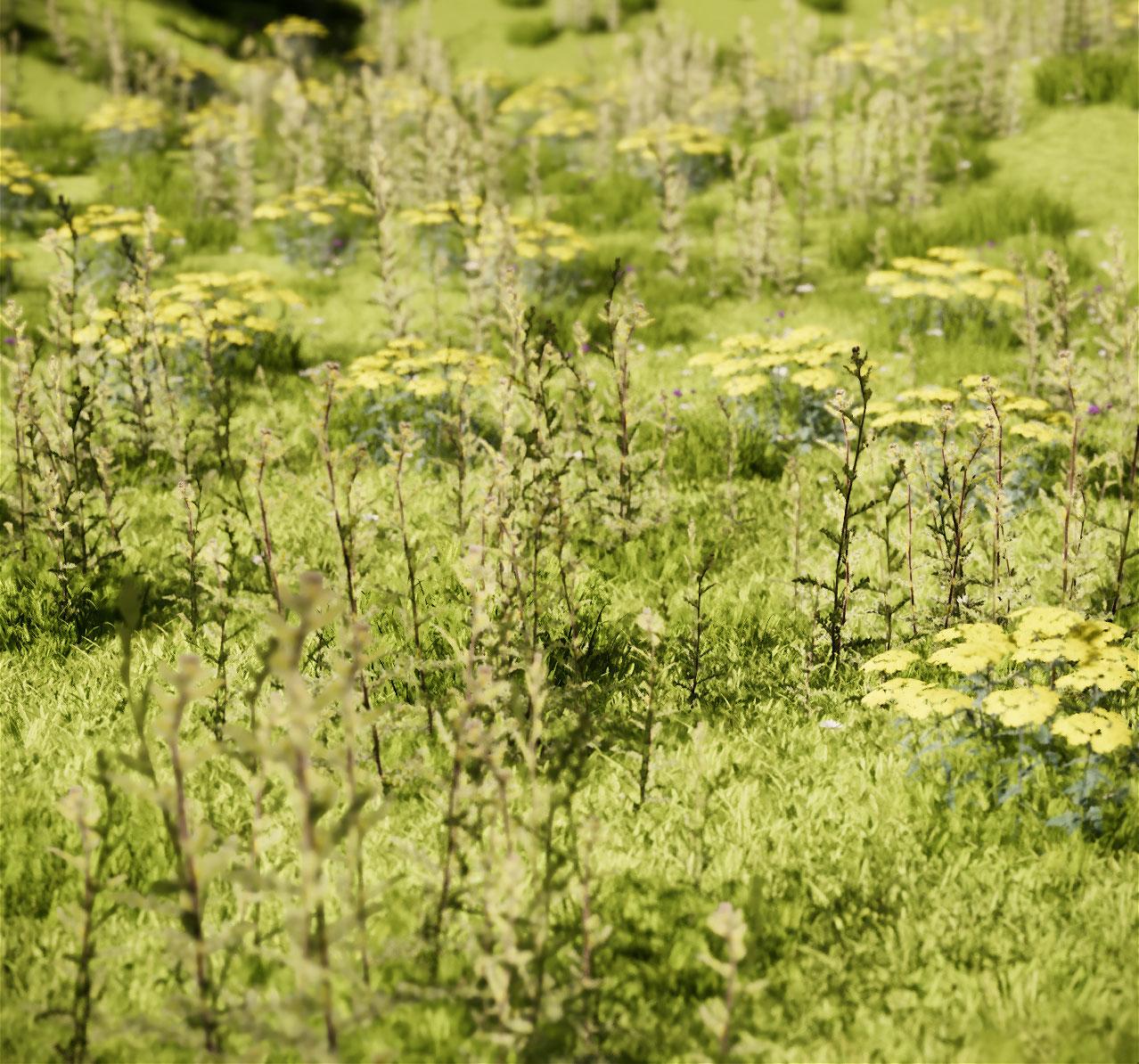 Perspective-paysage-architecure-prairie fleurie-illustration-3D.jpg
