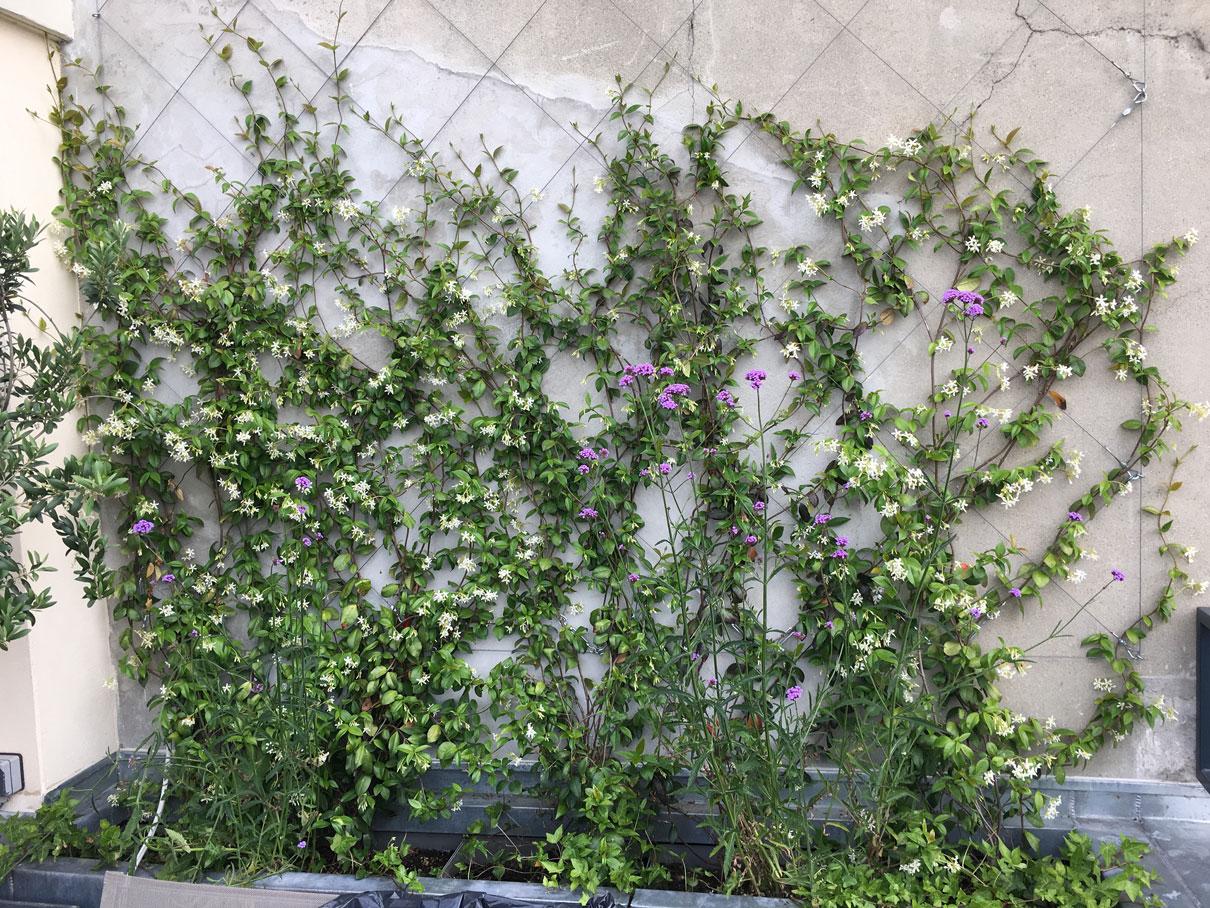Terrasse-balcon-amenagement-paysager-vegetalisation-paysagiste-paris-5.jpg