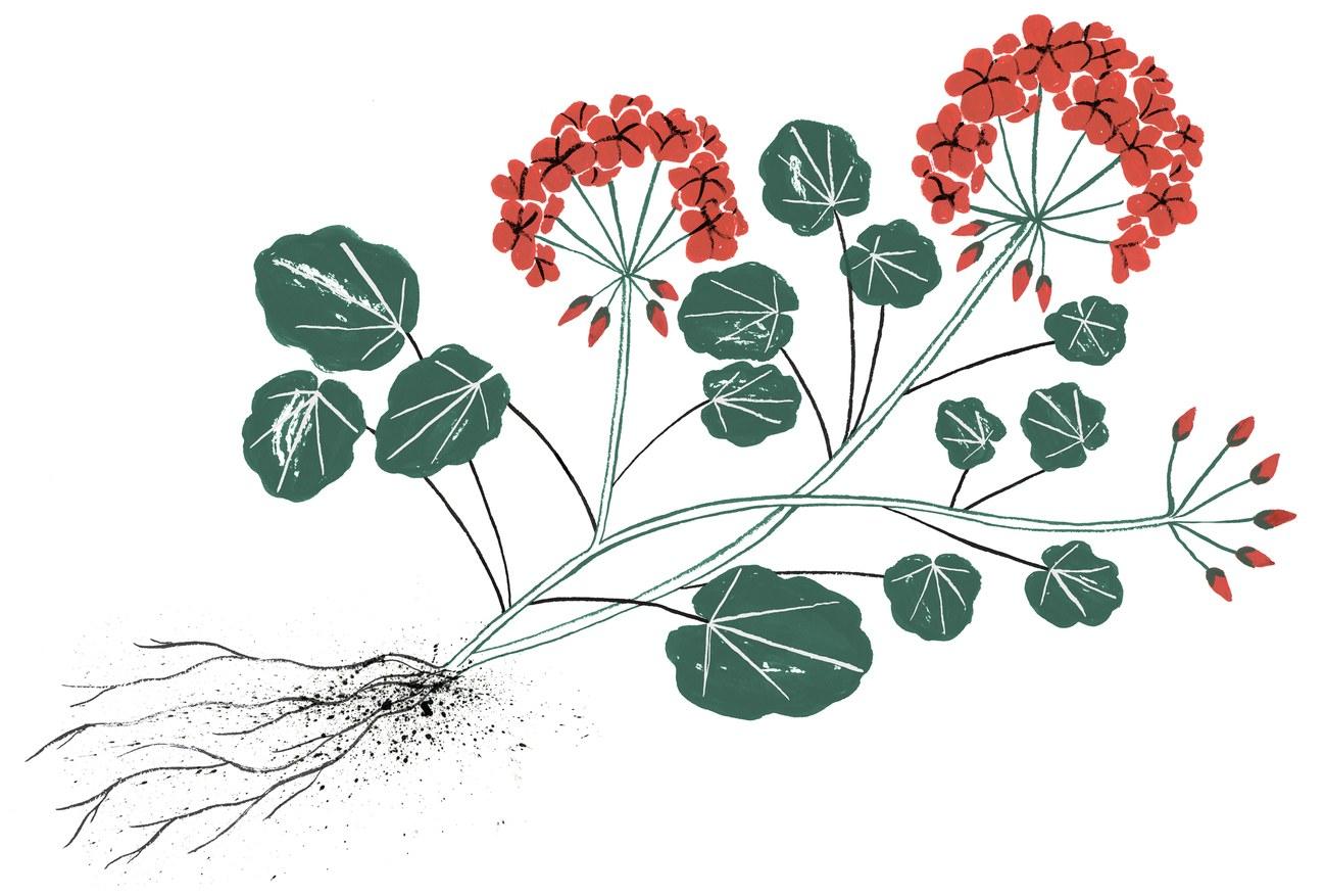 Illustration by Kaye Blegvad