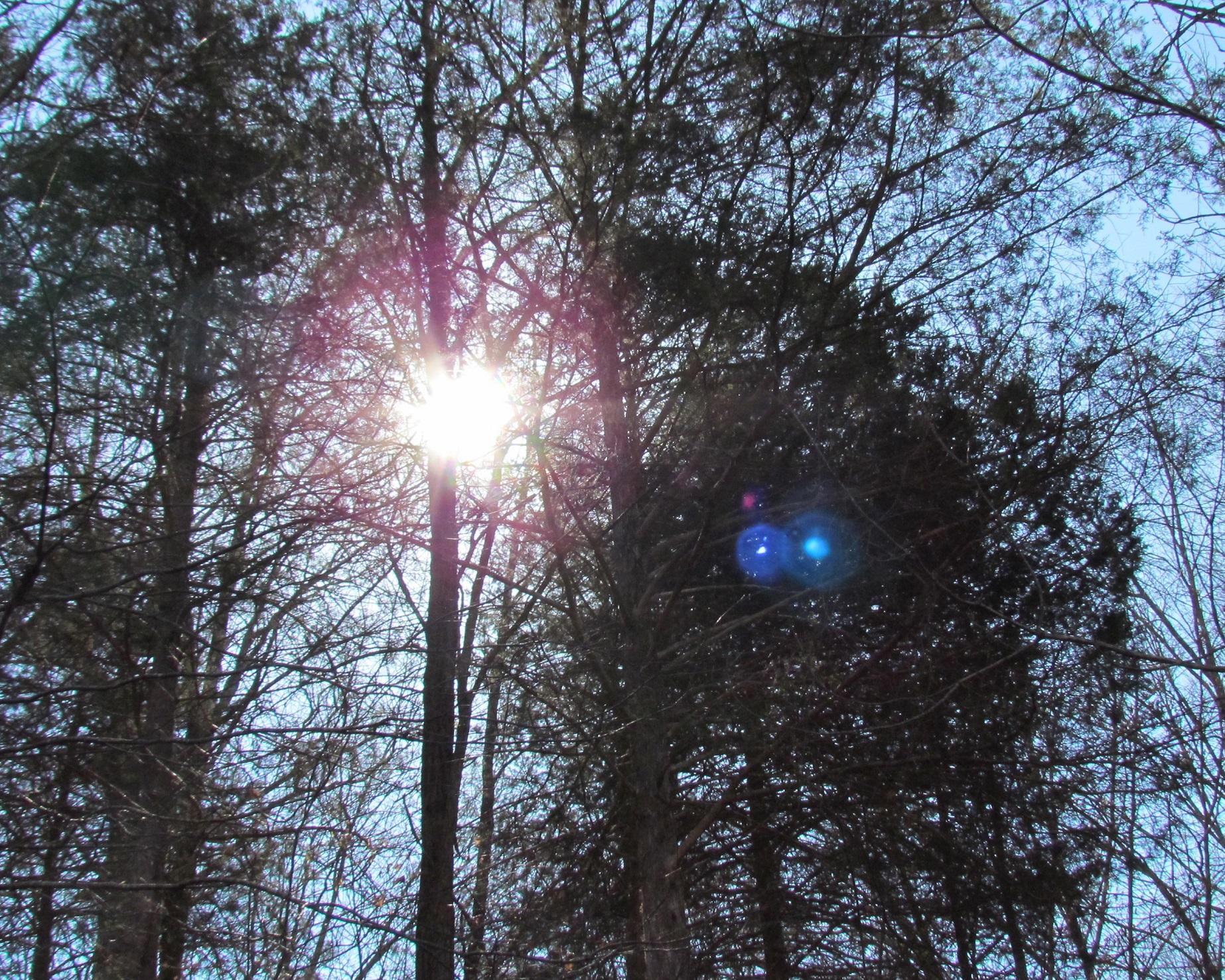 sunshine-thru-trees.jpg