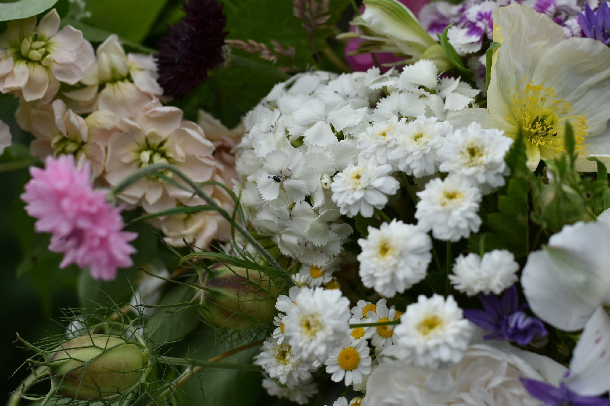 Close up of British flowers grown at The Midnight Garden Flower Farm