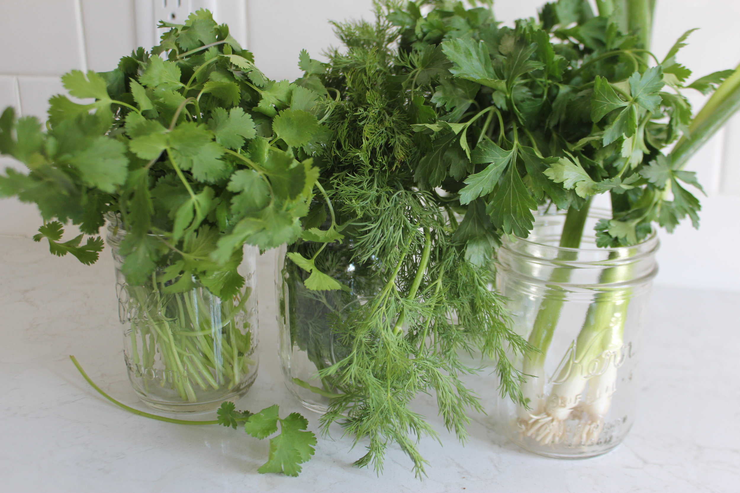 Cilantro, Parsley, Dill, Green Onion