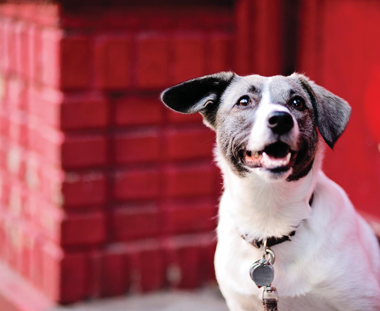 Adopt — Sean Casey Animal Rescue
