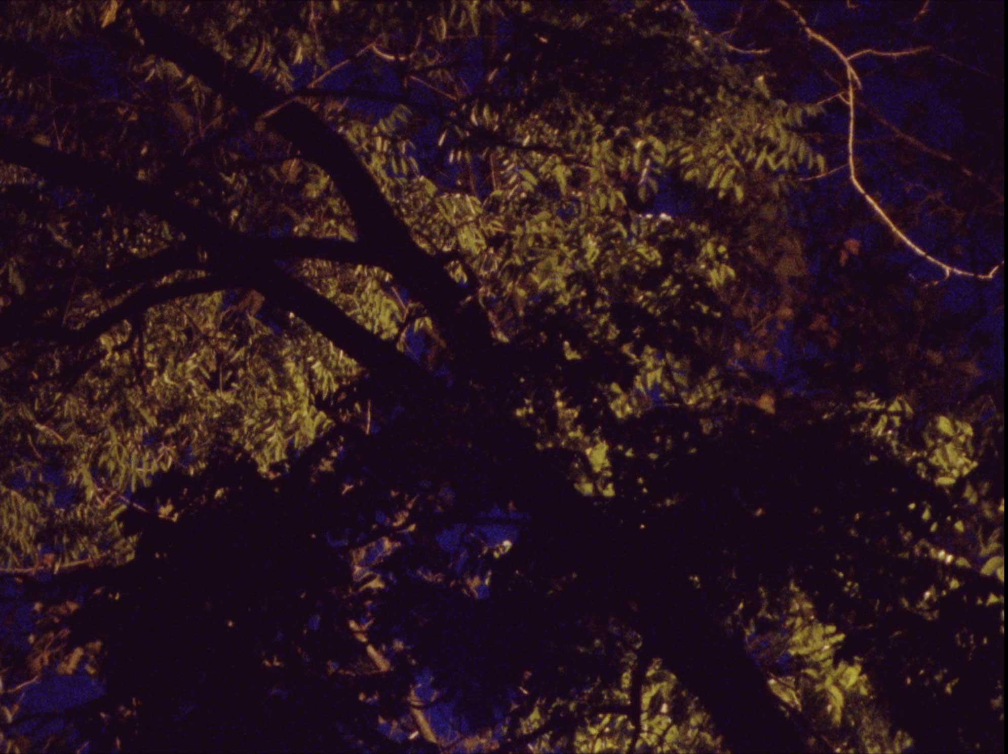stil8_leaves_yellow.jpg
