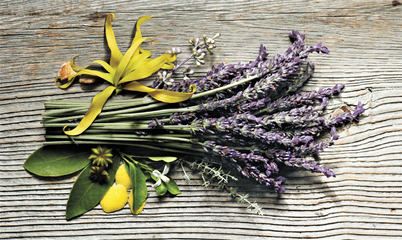 Aveda-Shampure-ingredients.jpg