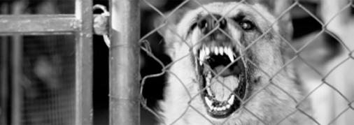 animal bite law -