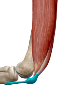 iii) Lateral view with knee flexion.