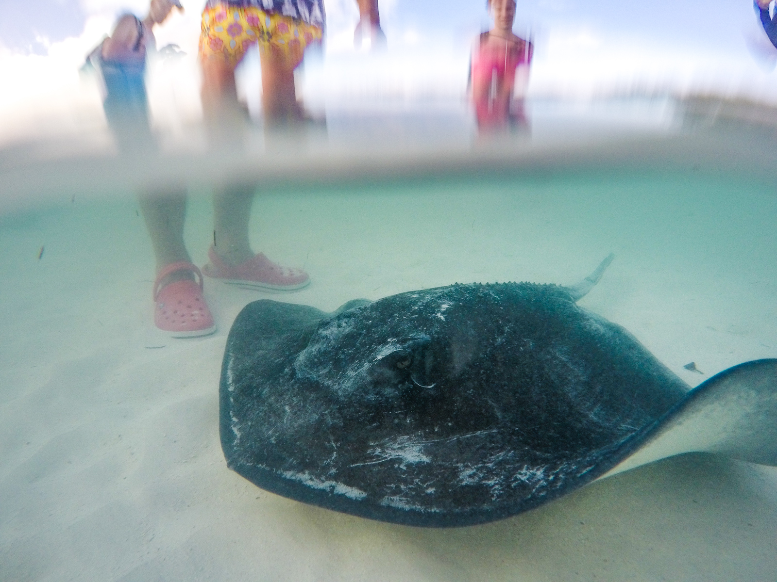 A visit from a friendly sting ray (Water shoes on a tourist from a different boat).