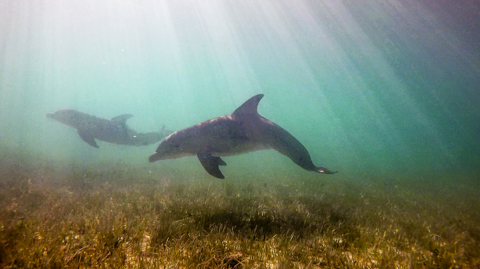 Dolphin photos by Zack.