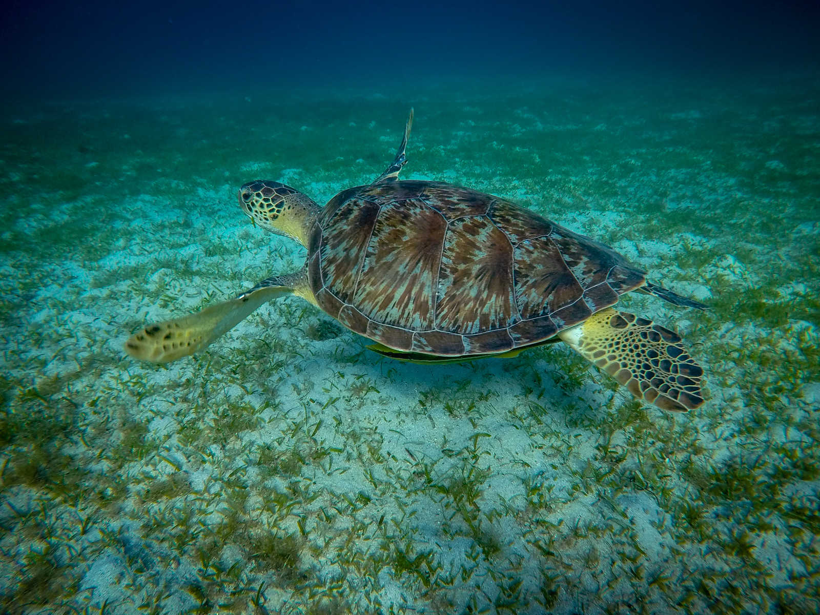 A huge green sea turtle welcomed us to our morning swim.