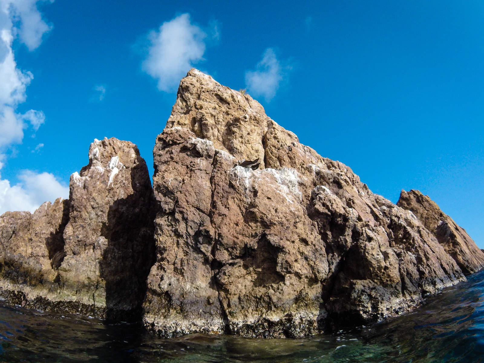 A brown booby greets us from an outcrop at the Indians, a place in the BVI that wen't largely unscathed by last year's devastating hurricane season.