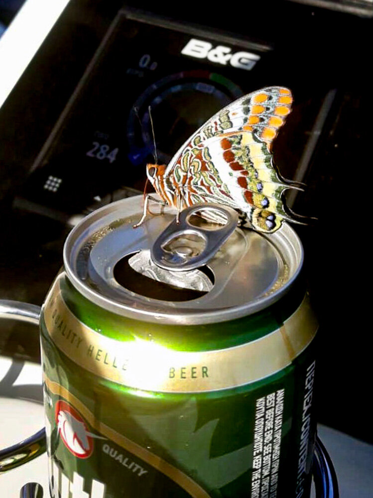 Richie got a visit and a photo of this Foxy Emperor butterfly!