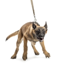 How to stop dominant aggressive dog barking and lunging at other dogs and people?
