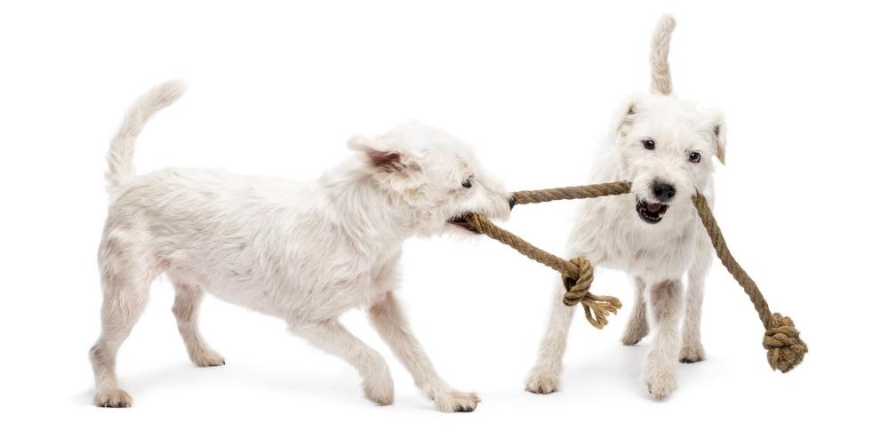 Register for puppy social in Oakland, Berkeley, El Cerrito, Alameda, Piedmont, Rockridge.