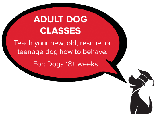 Best puppy training class and dog training class in the East Bay.