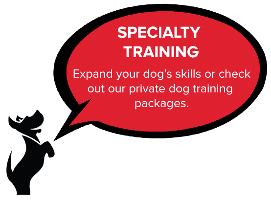 East Bay leash reactive dog class, dog agility, dog tricks, CGC, therapy dog class.