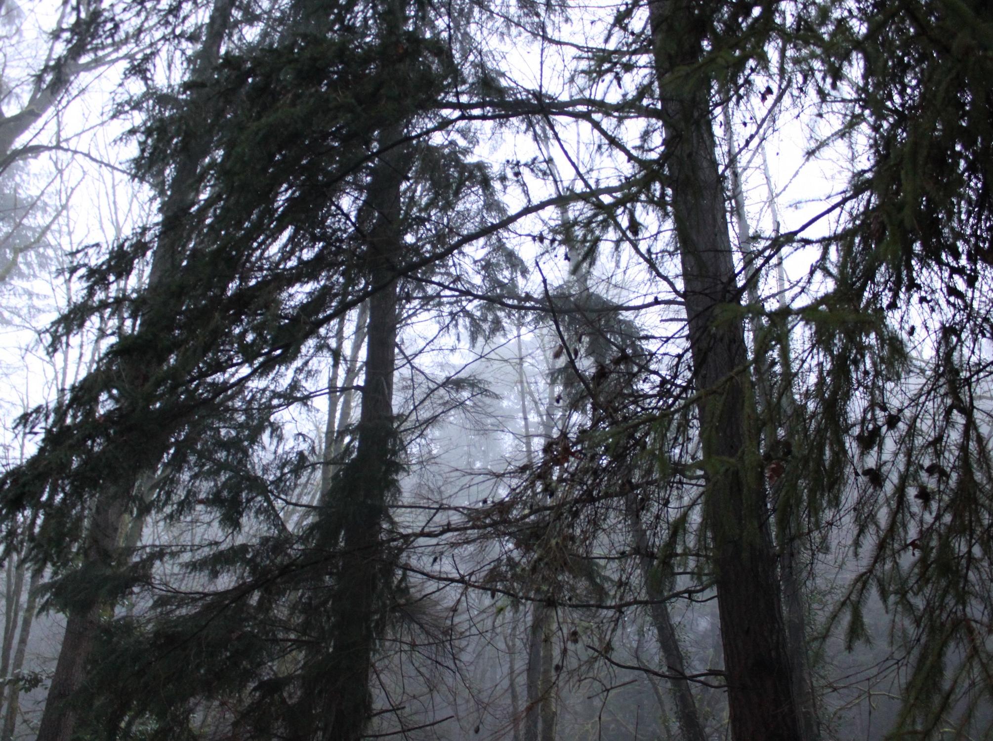 Fog Trees.jpg