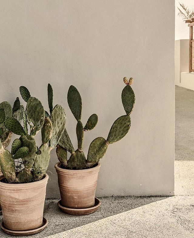 The best accent to your boho life. 🌵 #BohoMeCollection #cactuslover #natureinspired