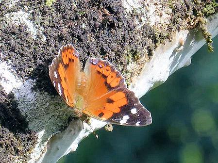 butterflybig2.jpg