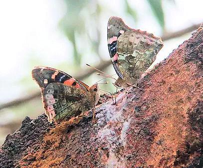 butterflybig1.jpg