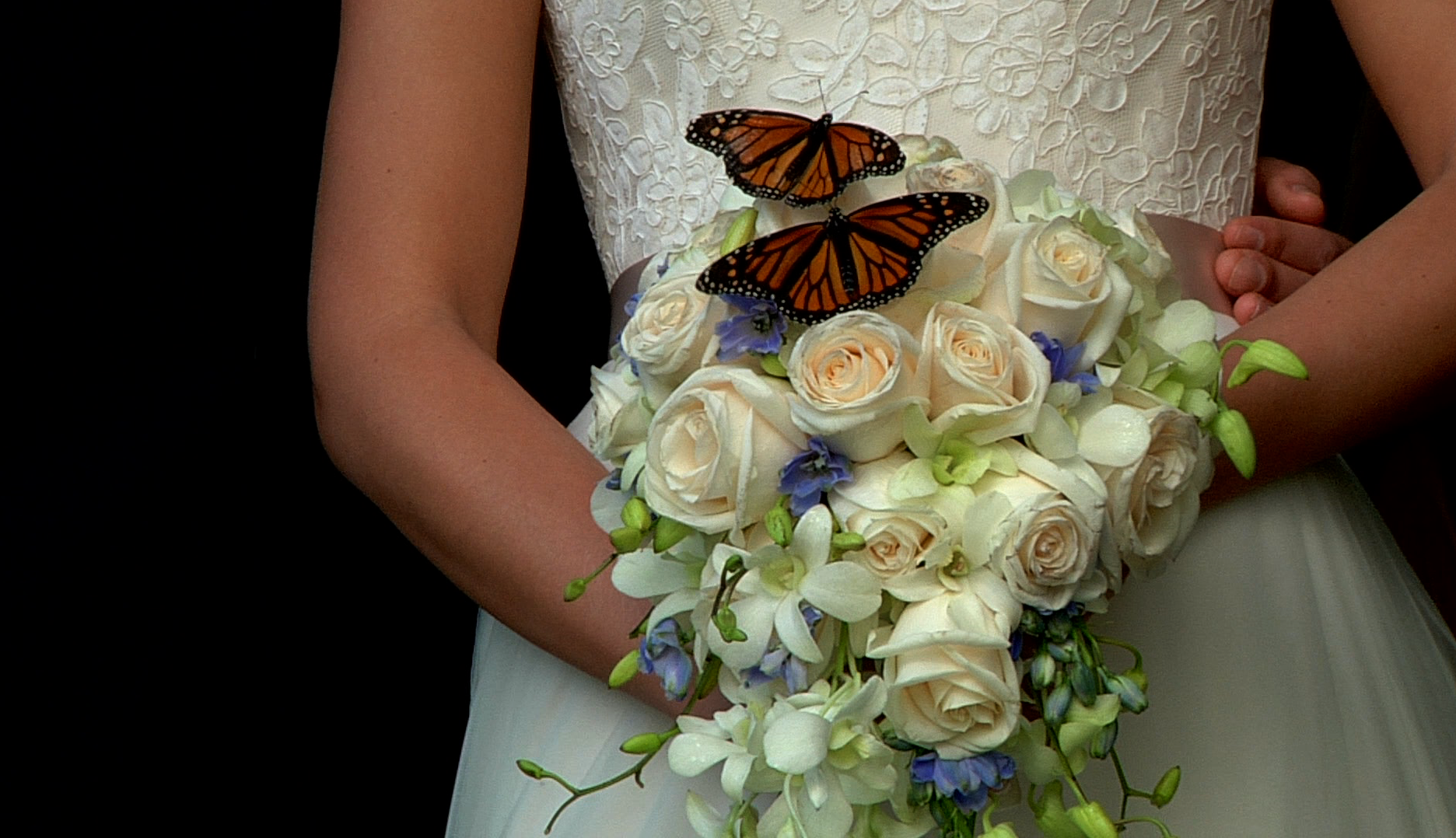 Butterfly-bouquet.png