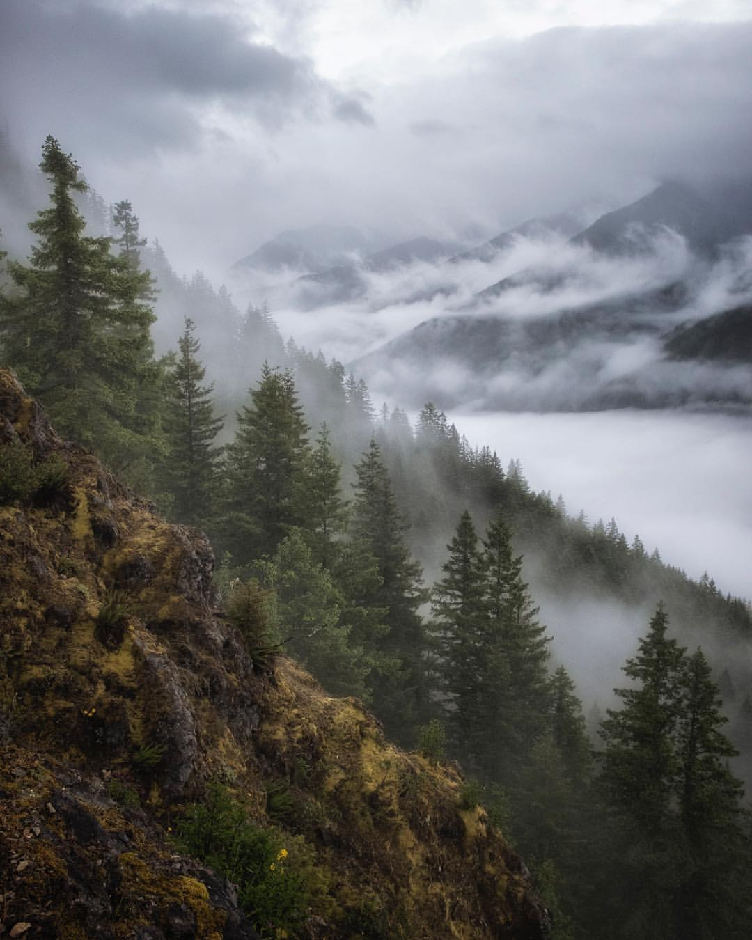 A Northern Olympic River Valley