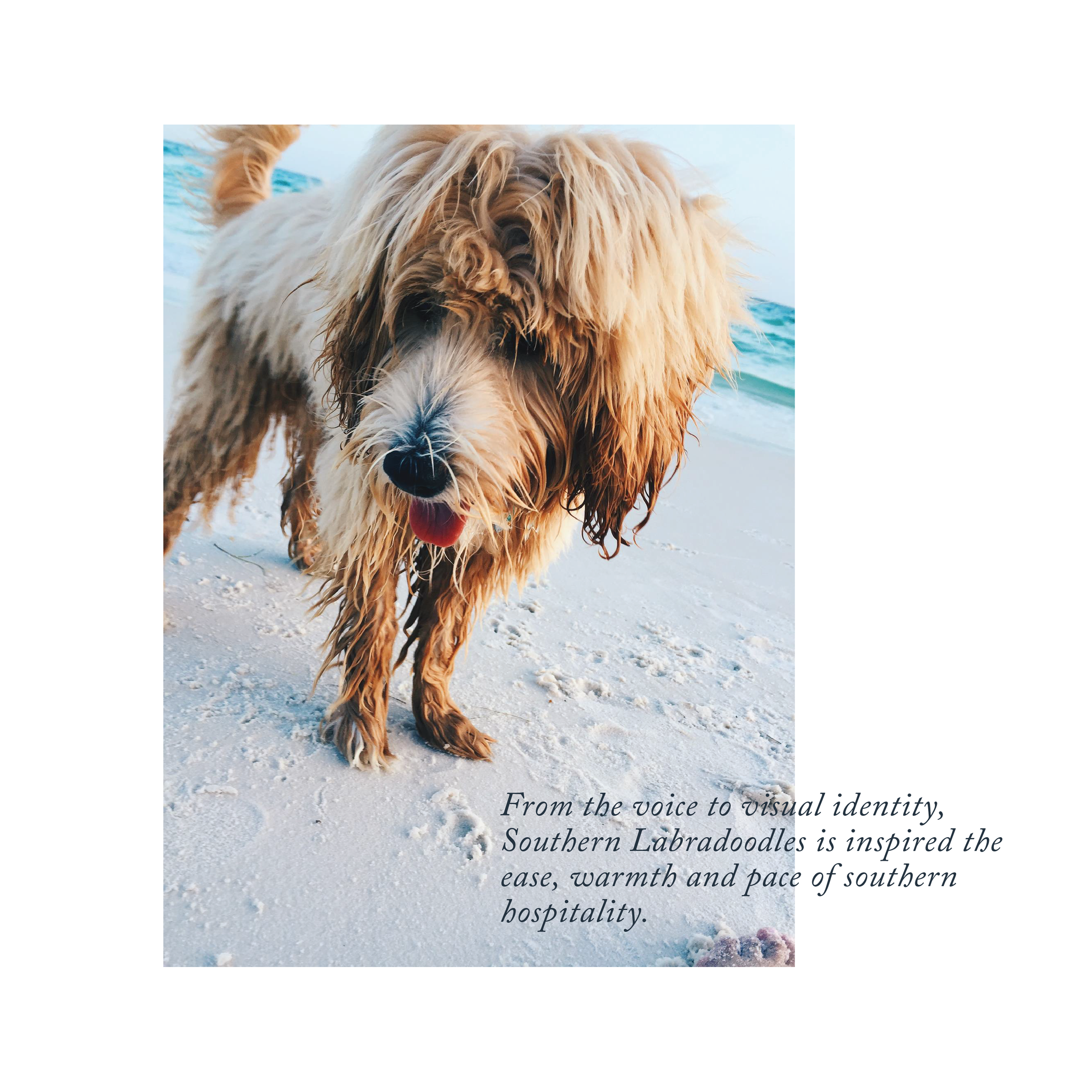 Updated Southern Labradoodles Brand Book-08.png