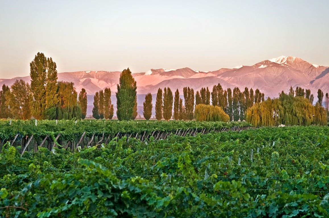 Wine lands of Mendoza