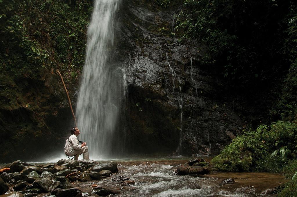 Copal Rainforest, Cloud Forest, Ecuador