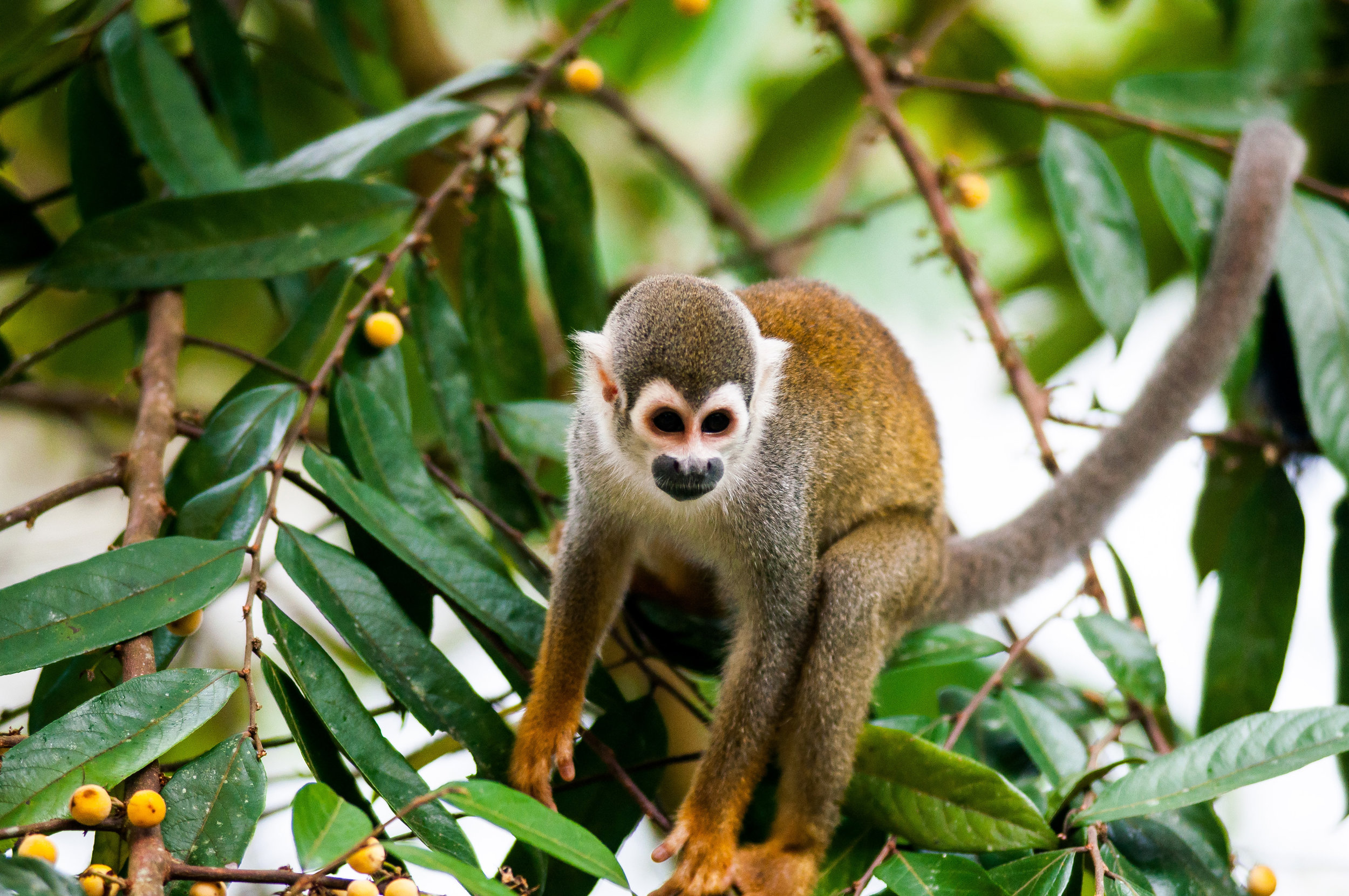 Wildlife in the Amazon of Ecuador