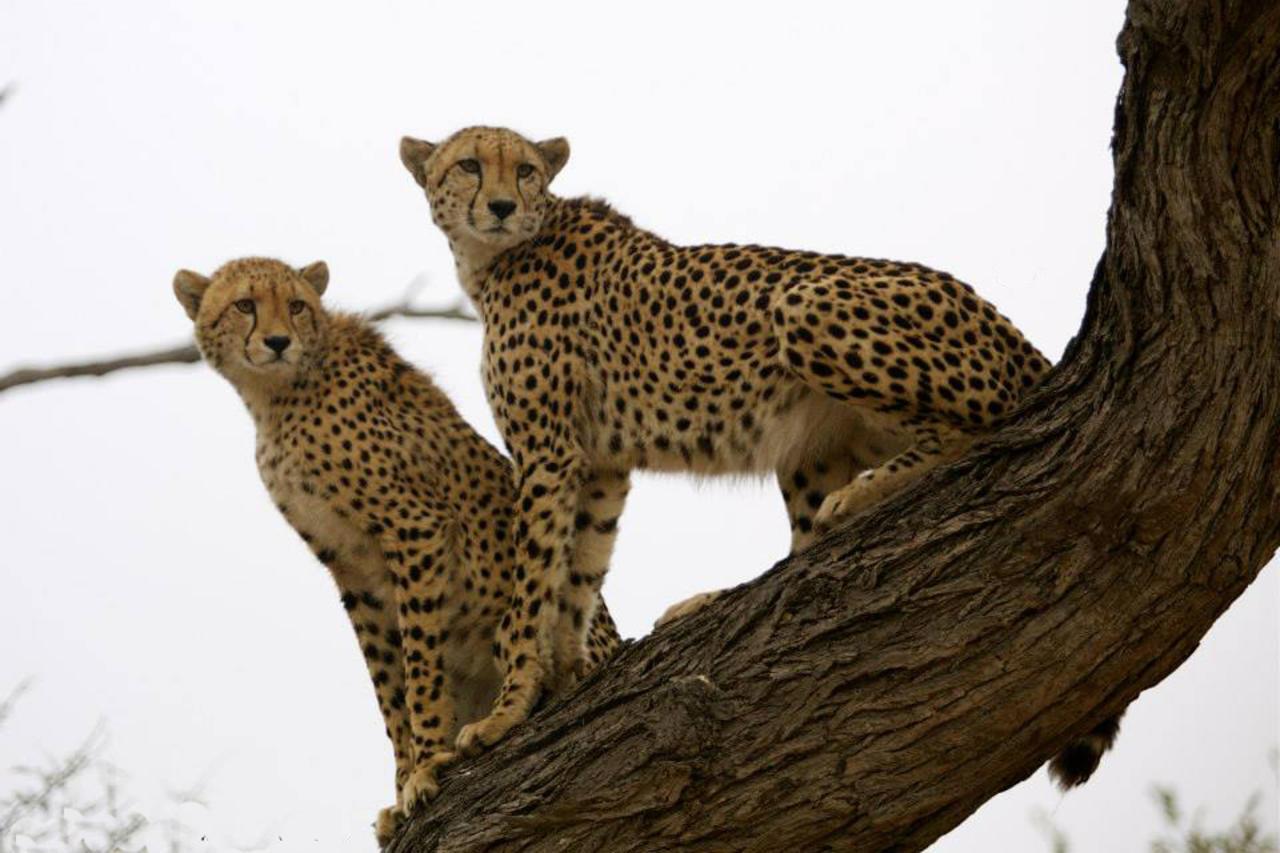 Safari in Timbavati Private Nature Reserve