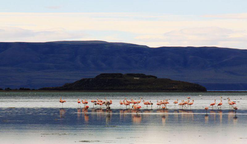 Flamingos in El Calafate, Patagonia, Argentina