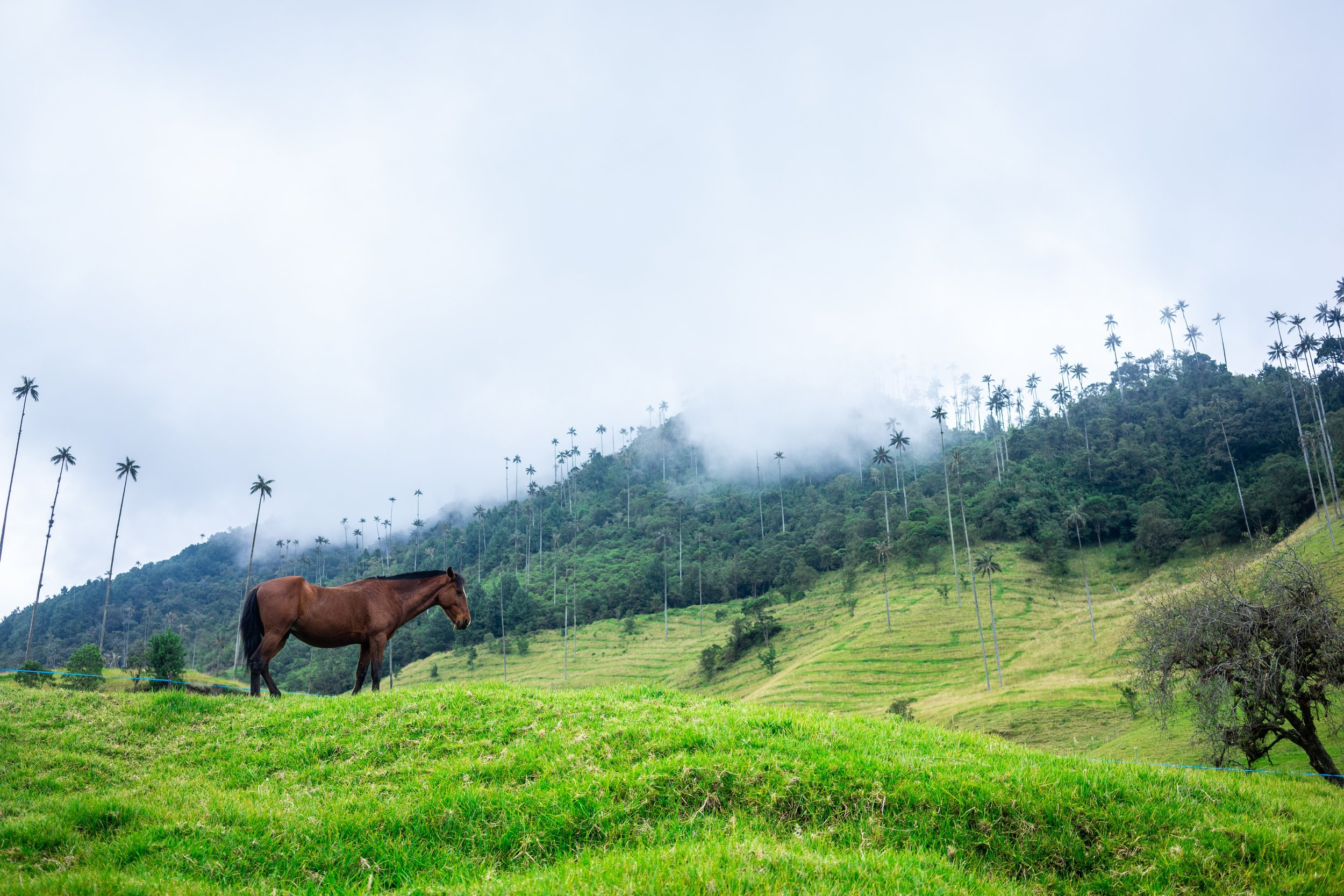 Landscape of Cocora Valley, Colombia