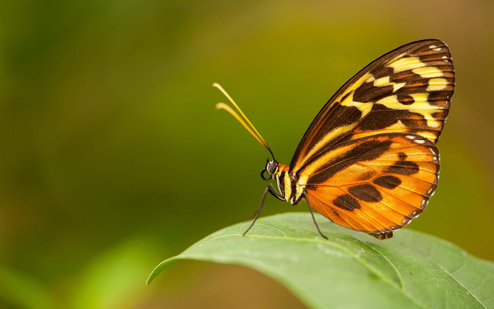 Butterfly Garden at Sacha Lodge, Amazon, Ecuador