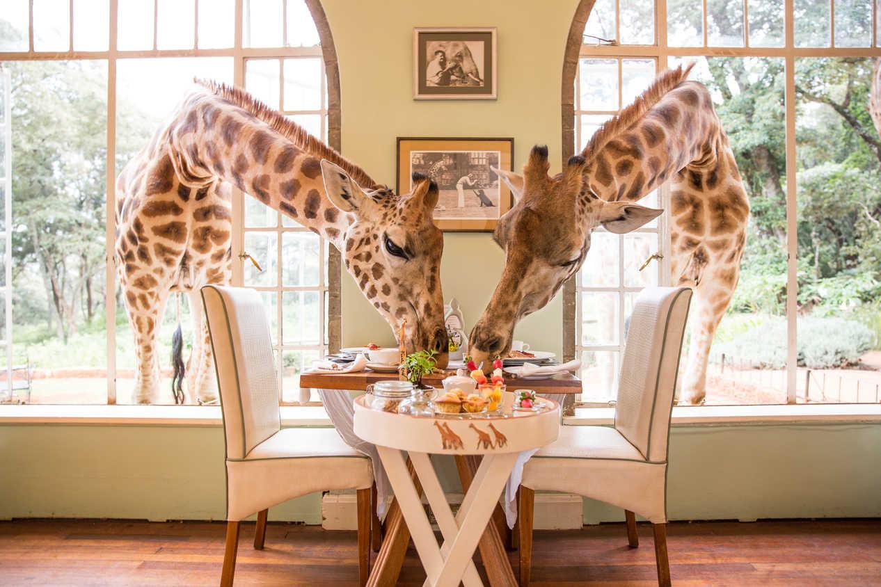 A typical breakfast at Giraffe Manor, Nairobi, Kenya
