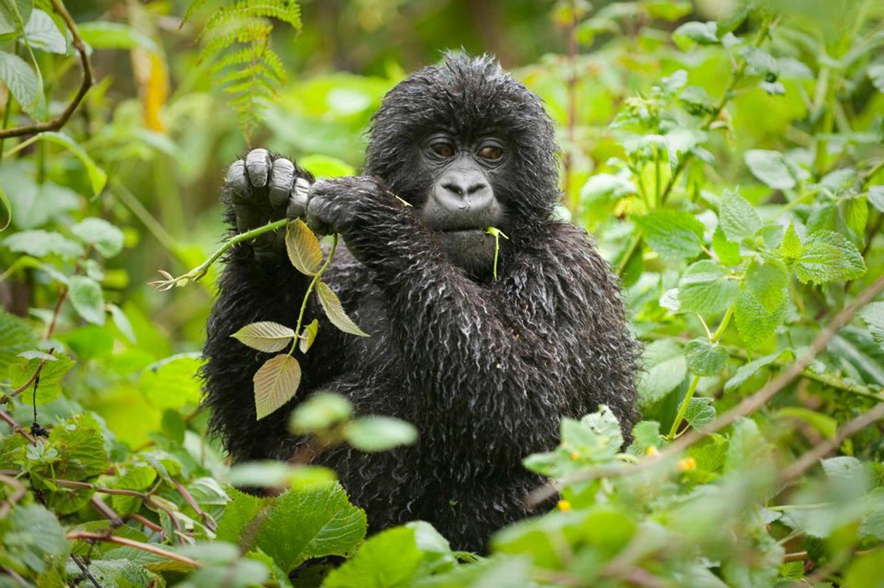 Day 7 - Bwindi Lodge, Bwindi Impenetrable Forest, Uganda