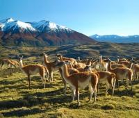 Landscape surrounding eco Camp Patagonia, Chile